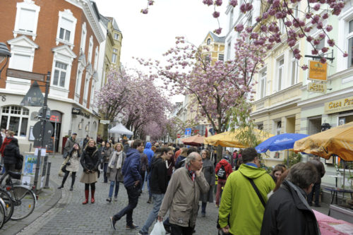 Kirschblütenliveticker-Kirschblütenfest-Bonn-Samstag-23.4.16