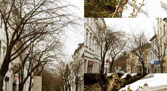 Kirschbluete-heute-DI-21.3.17