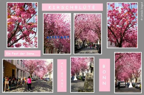 188-2015-Wett-U.Dagne-Kirschblüte
