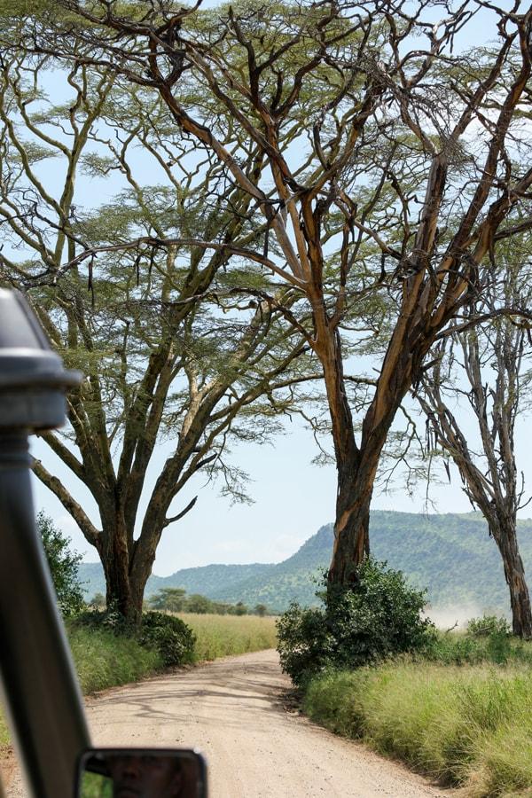 Tanzania Gallery