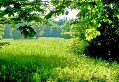 Green Spaces Alleviate Stress and Anxiety