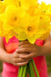 New beginnings - easter dafodils