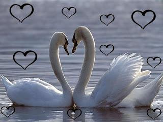cinta apa adanya