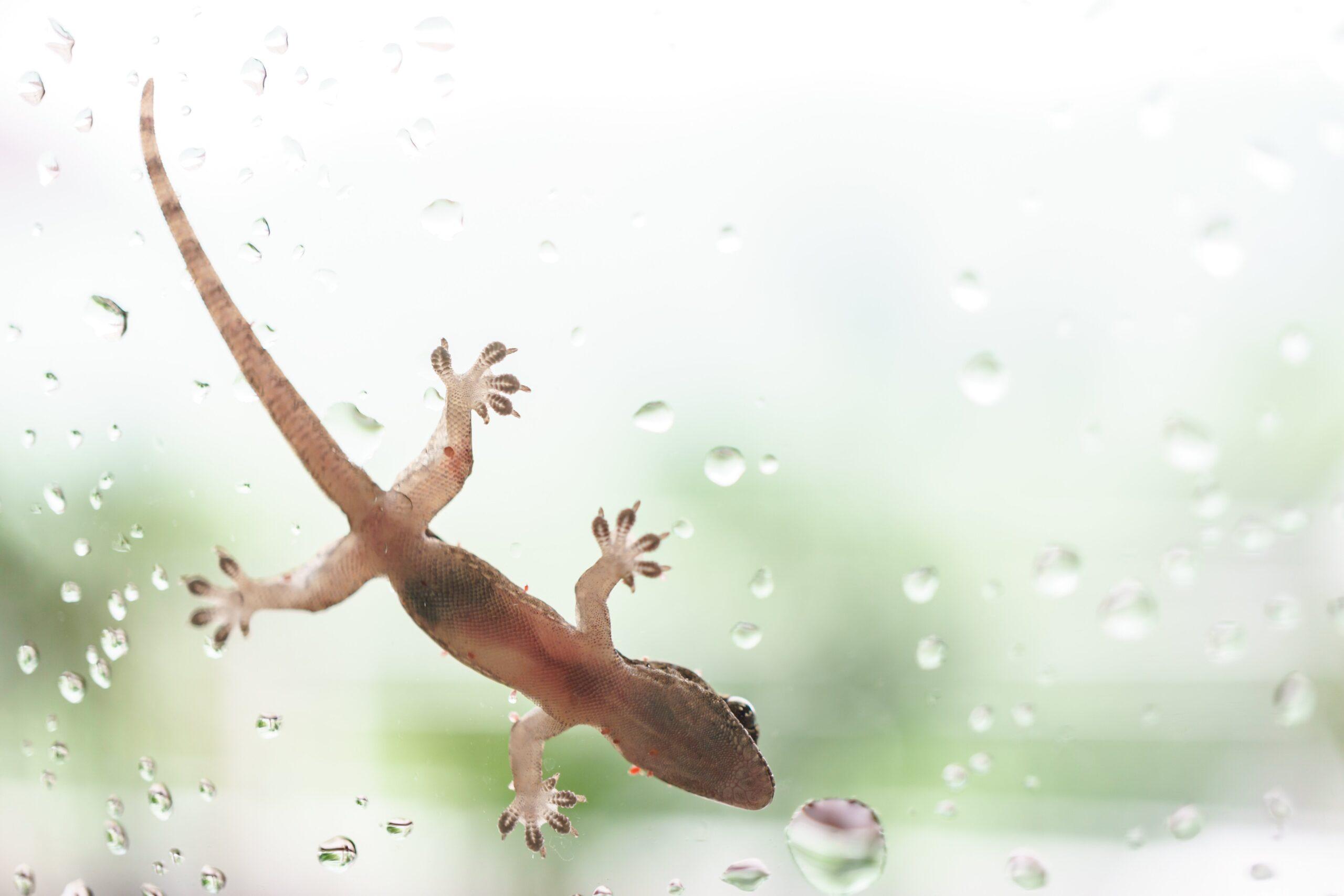 Gecko Problem