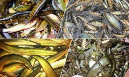 হাওরের চিত্র: ৬২ প্রজাতির মাছ বিলুপ্তির পথে