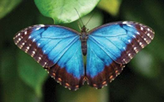 জগৎজুড়ে নীলের ছোঁয়া