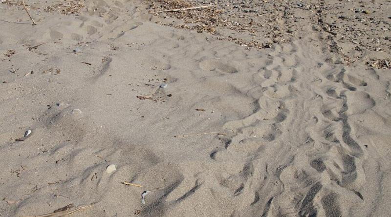 Turtle nest in Kissamos