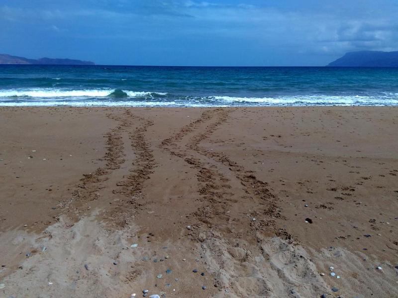 First sea turtle tracks in Kissamos 2016