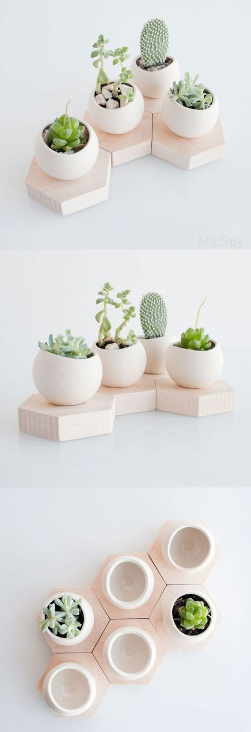 succulent plant decor idea 7