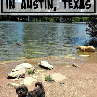 Best Dog Parks in Austin, Texas