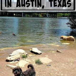 Best Dog Parks in Austin, Texas