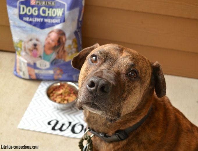 DIY Custom Dog Placemat