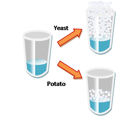 how catalase enzyme works in breaking down hydrogen peroxide into water and oxygen Although they work powerfully, enzymes are just chemical molecules, made up of   it breaks the chemical hydrogen peroxide down to water and oxygen catalase  is found in all cells and protects them from this dangerous waste chemical.