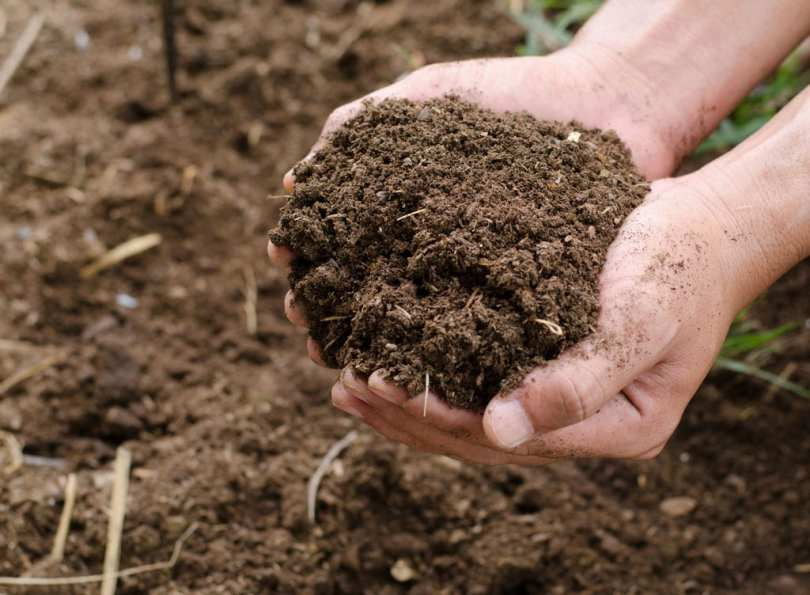 Someone holding a handful of soil.