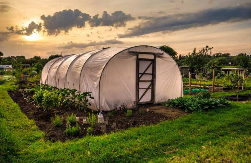 A polytunnel in an allotment.