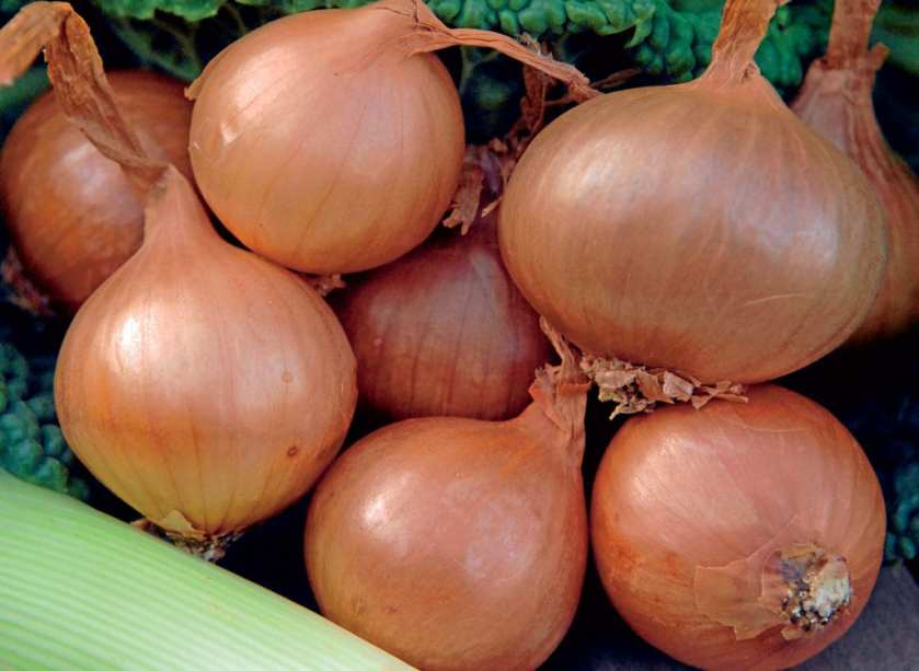 A bunch of onions on a bed of leaves.