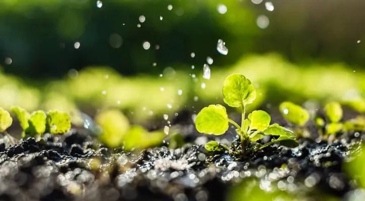 RHS to recruit garden water scientist