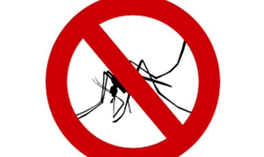 fight dengue