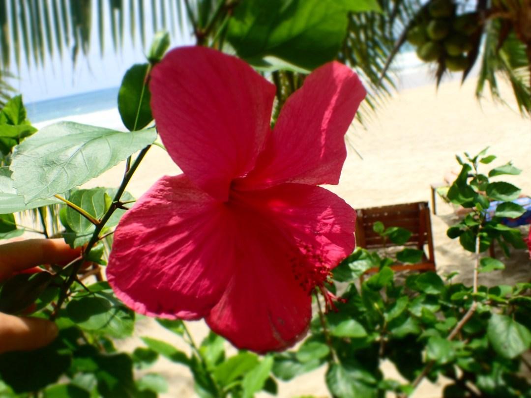 Flowerpower Juara Beach