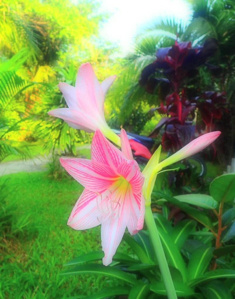 """""""kenn ich nicht""""- Blume in pink"""