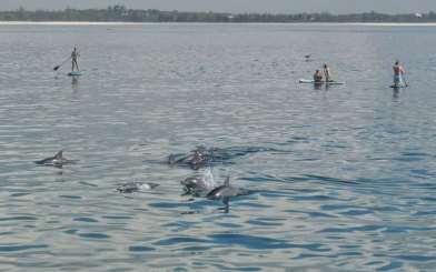Kenyan dolphins