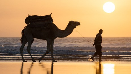 Sunset camel - Essaouira
