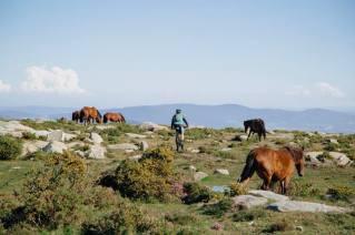 Viana nature