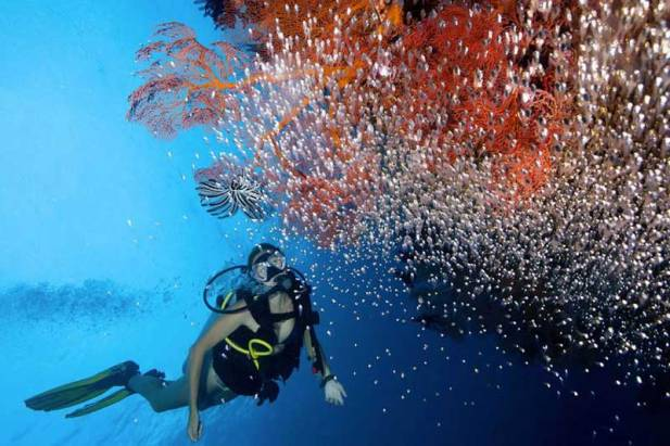 Wind Voyager diving