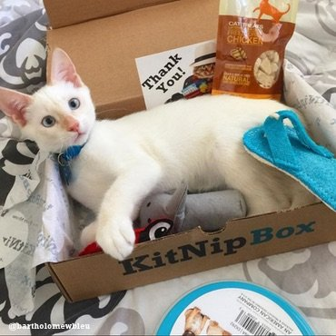 Purr...I wonder what cat treats are in this month's box
