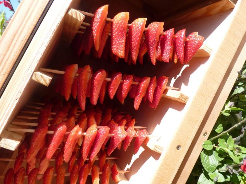 Fraises dans le Séchoir à Fruits Solaire