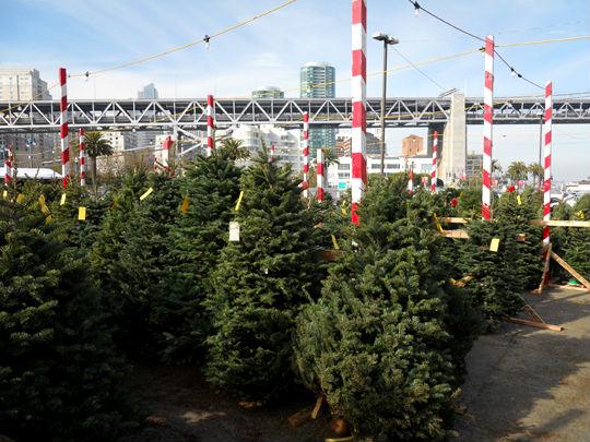 Where To Buy A Christmas Tree In Kitsilano