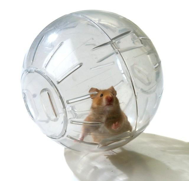 hamster-ball