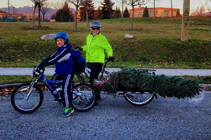 @sunrise604 hauls a Christmas Tree home by bike