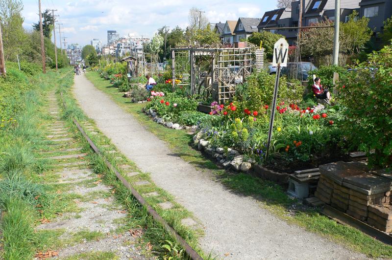 Maple Community Garden