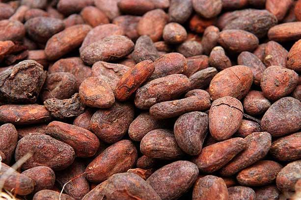 4cocoabeans_435856n