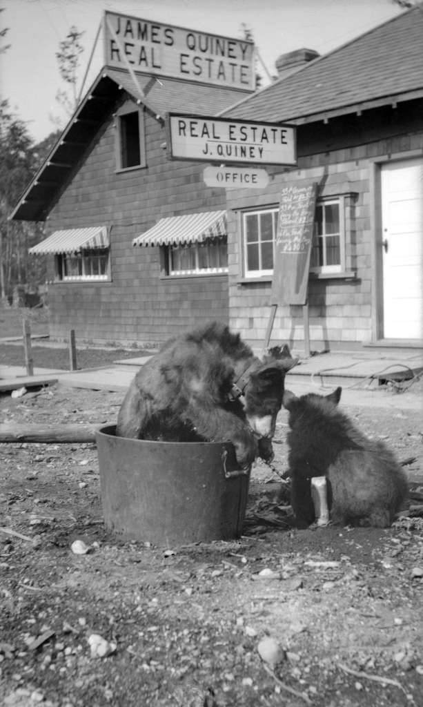 Vancouver Archives: 1920. [Bear] cubs from Kitsilano forest [at] 1820 Waterloo Street. AM1584-: CVA 7-23