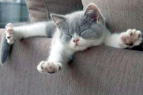Little Kitten Big Stretch Kittens Whiskers