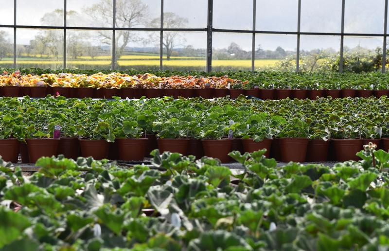 Bedding Plants Kitts Green Nursery