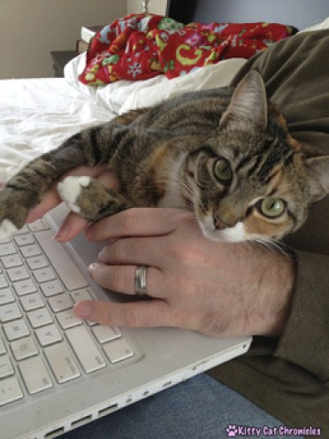 Adopt-a-Shelter-Cat Month: 12 Reasons to Adopt a Cat! - Cat on Computer