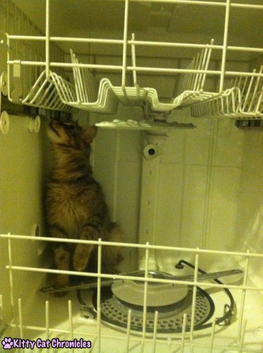 12 Reasons to Adopt a Shelter Cat - Cat in Dishwasher
