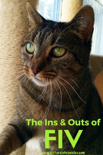The Ins & Outs of FIV