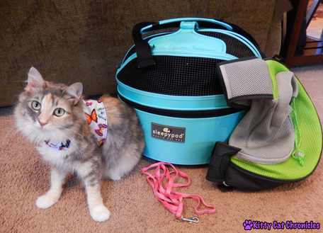 Traveling with Cats: Sophie's Packing List
