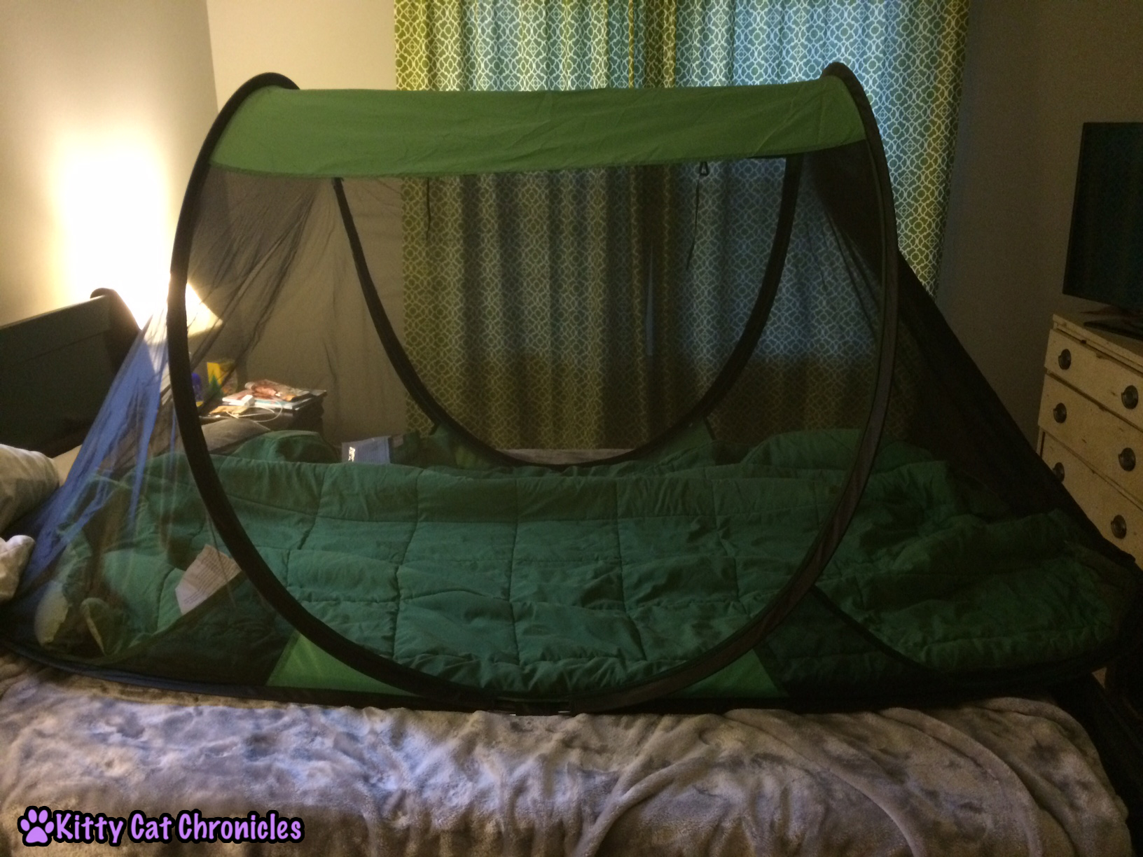 pop up tent for sugar gliders & Sugar Glider Basics - Kitty Cat Chronicles