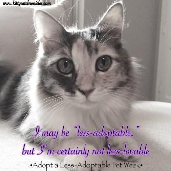 Adopt a Less-Adoptable Pet Week