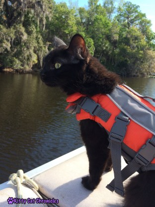 Get the Gear! 10 Must Have Accessories for Your Adventure Cat - Kylo Ren, cat in a life vest