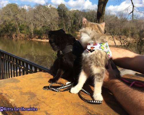 Sophie & Kylo at the River - Impromptu Adventure