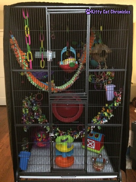 Jubilee and Sydney's Sugar Glider Cage