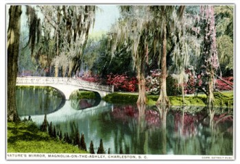 Best Cities for Cat Lovers & Adventure Cats: Charleston, SC - Magnolia Plantation & Gardens