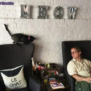 Pounce Cat Cafe - Georgia & Bobby
