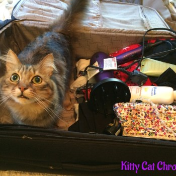Caster is Ready to Hit the Road to BlogPaws!